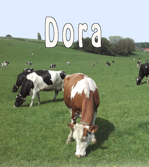 Koe Dora in landschap